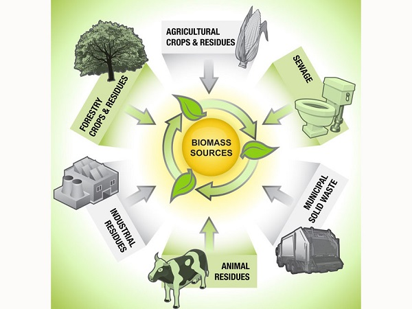 Brief introduction and development status of biomass energy